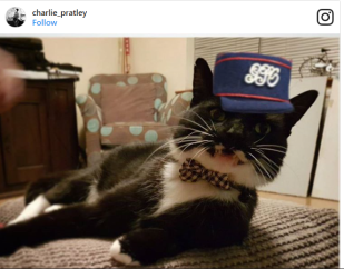 Tuxedo cat with british postal worker hat