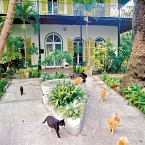 various cats in the Hemmingway House courtyard