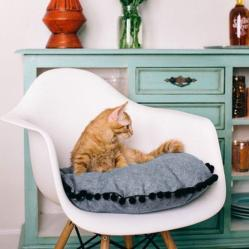 orange tabby on Island Cat Bed from Tuft + Paw