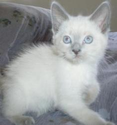 Jasmine as a kitten