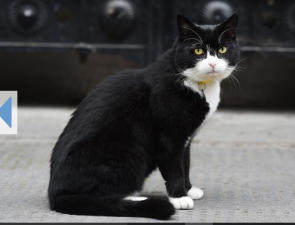 Palmerston the black and white tuxedo cat in the British foreign office