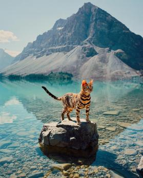 Bengal cat standing on a rock out in the water