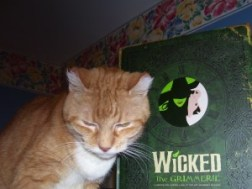 yellow tabby and the book Wicked