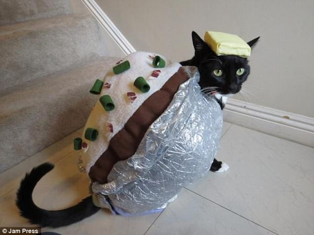 Tuxedo cat in baked potato Halloween costume