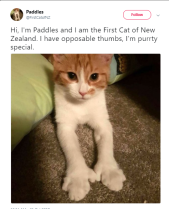 paddles the yellow and white first cat of New Zealand