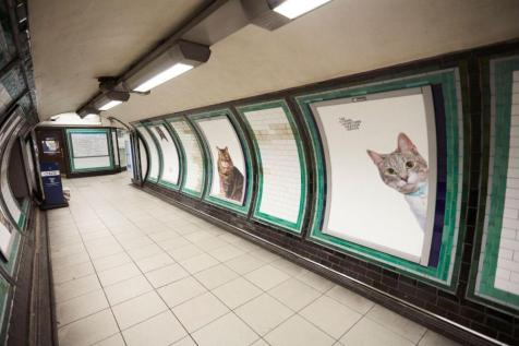 cat photos replace advertisements in English Tube station
