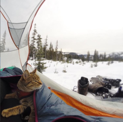 gray tabby camping in winter
