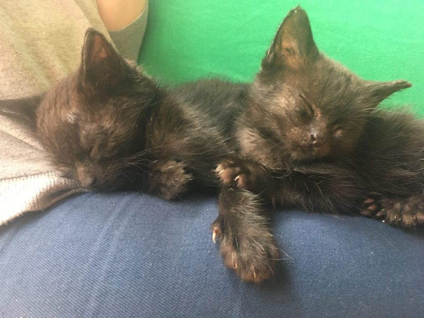 black kittens at the Dublin cat cafe