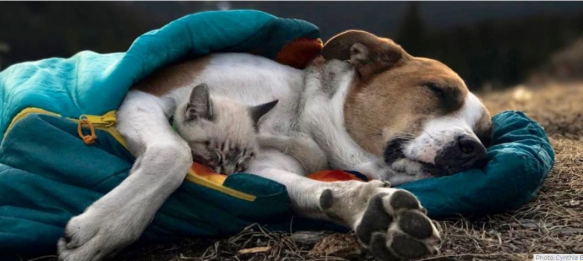 dog and cat in sleeping bag