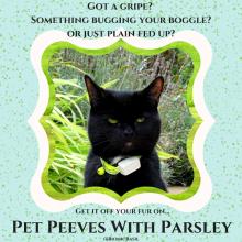 black cat named Parsley
