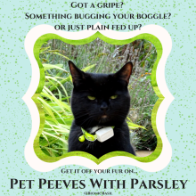 black cat named Parsley
