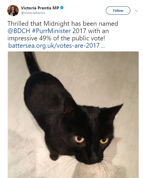 black cat named midnight new purr minister