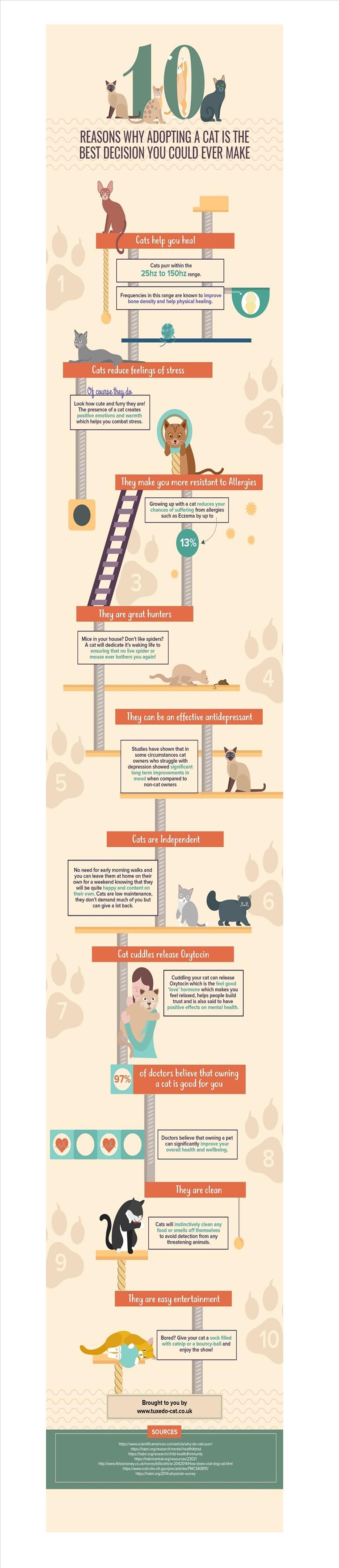cat adoption graphic