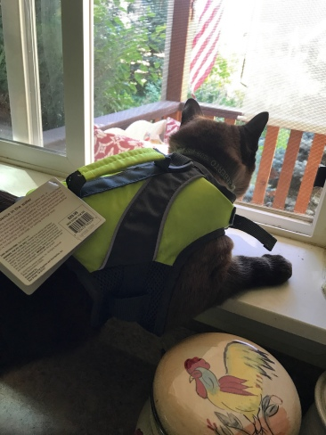 Siamese cat in life jacket