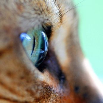 close up of cat eye