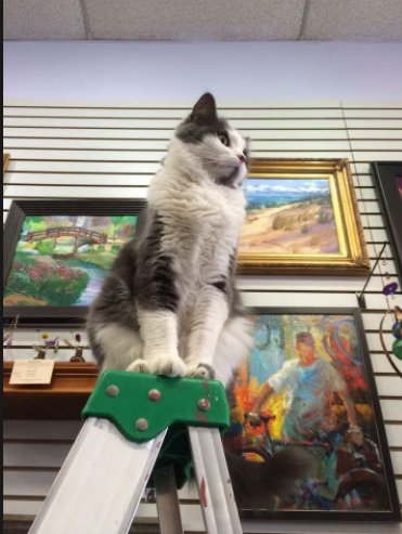 Black and White Cat on a ladder in an art gallery
