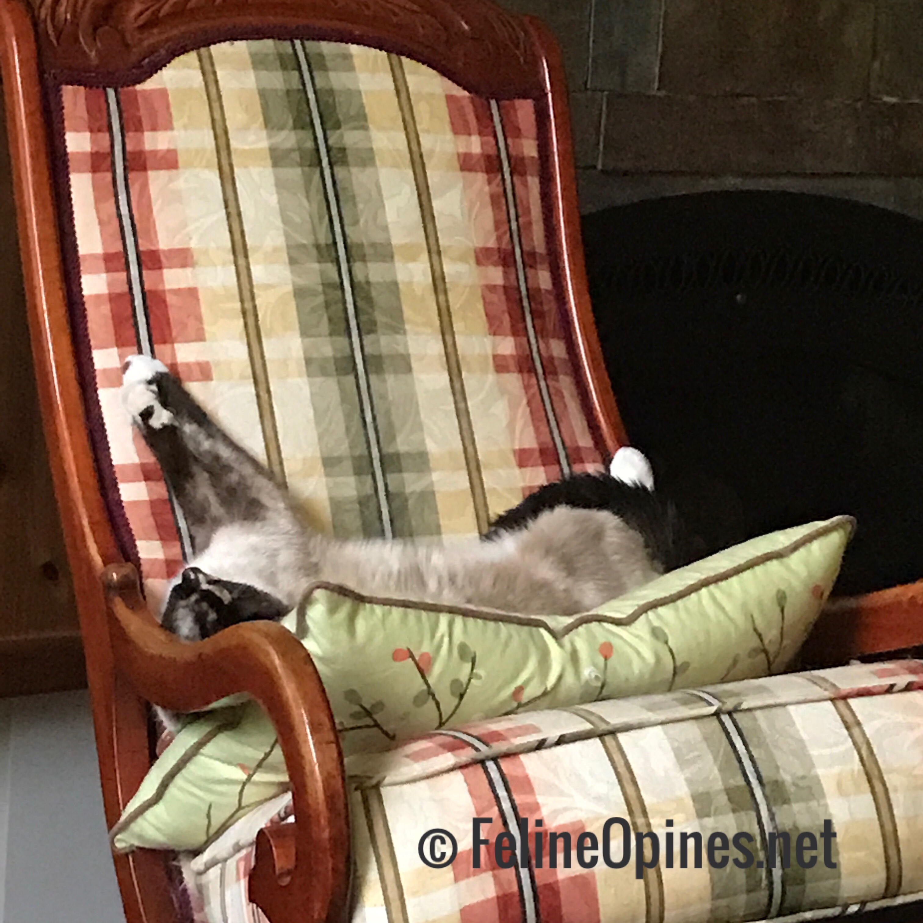 siamese cat on rocking chair