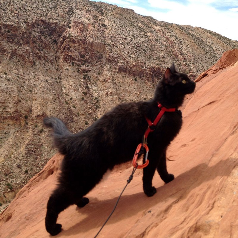 black cat climbs mountains with her human