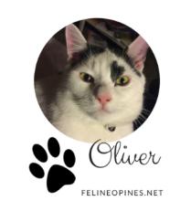 black and white cat Oliver