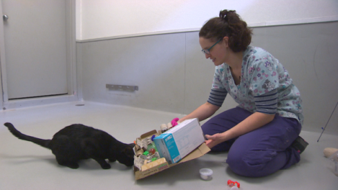 shelter worker plays with cat
