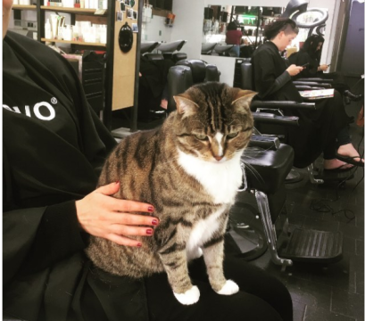 tabby cat in Melbourne hair salon