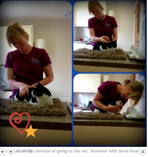 cat cuddler job in Dublin, Ireland