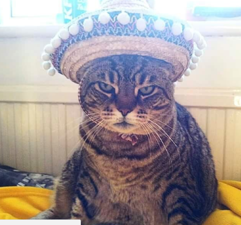 angry Tabby cat in a sombrero