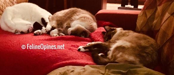 3 cats sleeping on a sofa