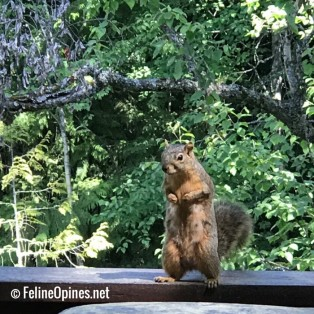 begging squirrel