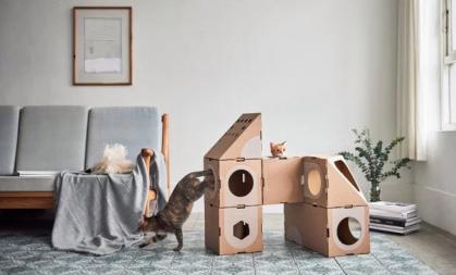 cardboardCatDwellings