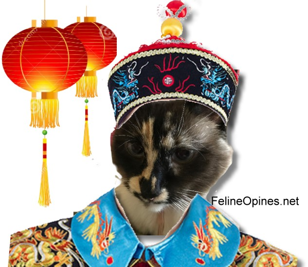 Siamese cat in Chinese costme