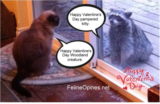 TuckRaccoon_Valentines