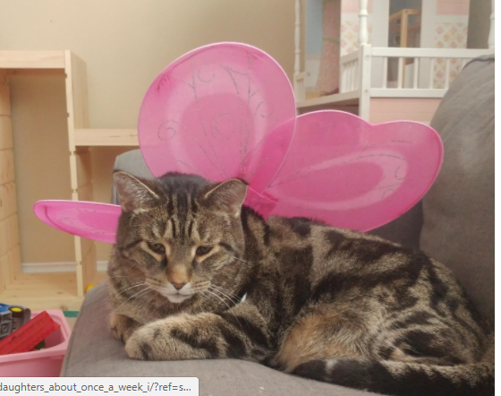 brown tabby with pink fairy wings