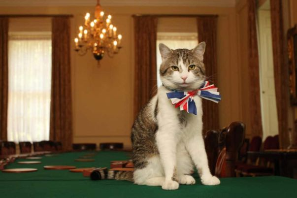 gray and white cat Larry the downing street cat