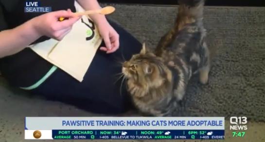 CatPawsitive