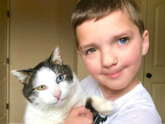 boy with multicolor eyes adopts cat with same condition