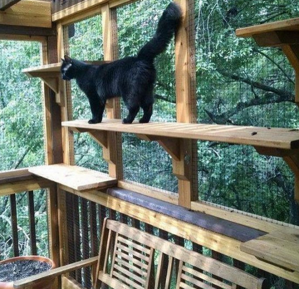 black cat in outdoor catio