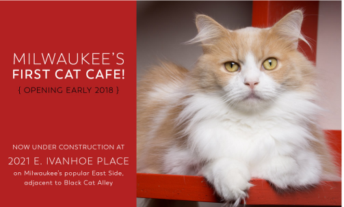 sip & purr cat cafe Milwaukee