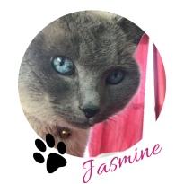 JasmineSig