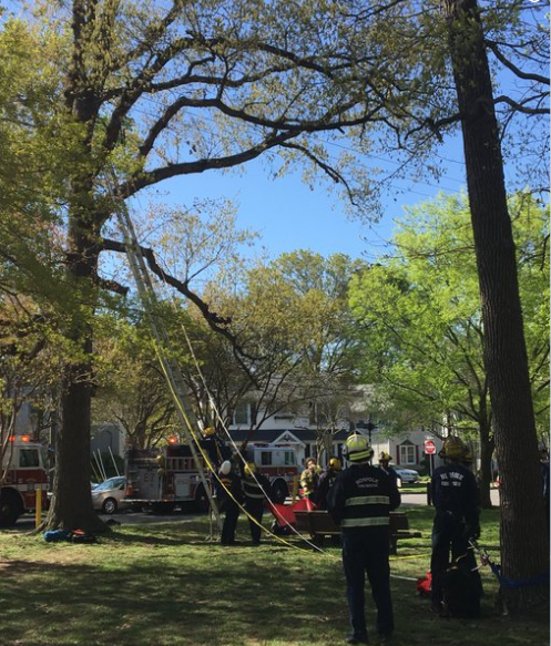 firefighters rescue man in tree who tried to rescue cat