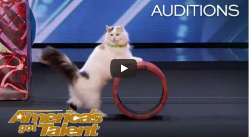 cats on Americas Got Talent