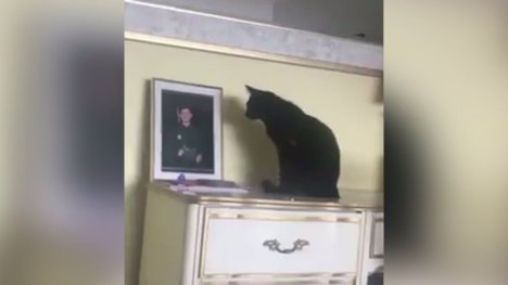 cat looks at photo of her owner who is away in the navy