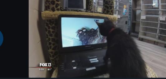 CatsComputers