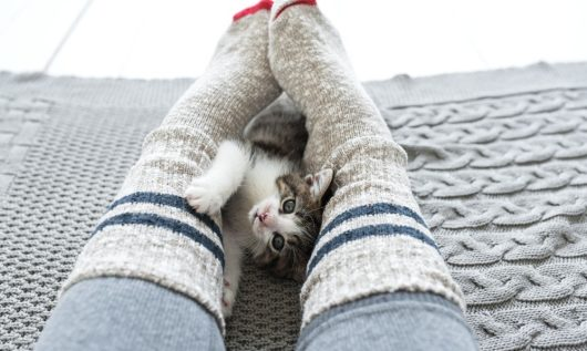 cats reduce stress in humans