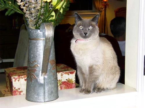 Siamese on counter with flowers