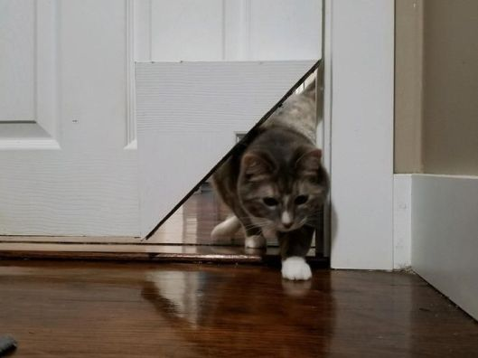 kitty korner cat door