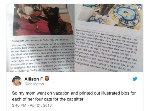 cat bios for pet sitters