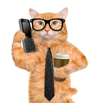 cat on smart phone with coffee