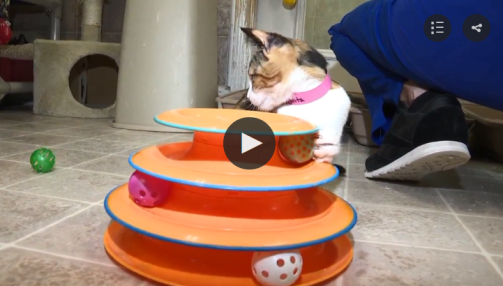 homeless cat gets help in Ft. Walton Beach, FL