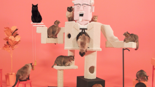 cats in KFC commercial